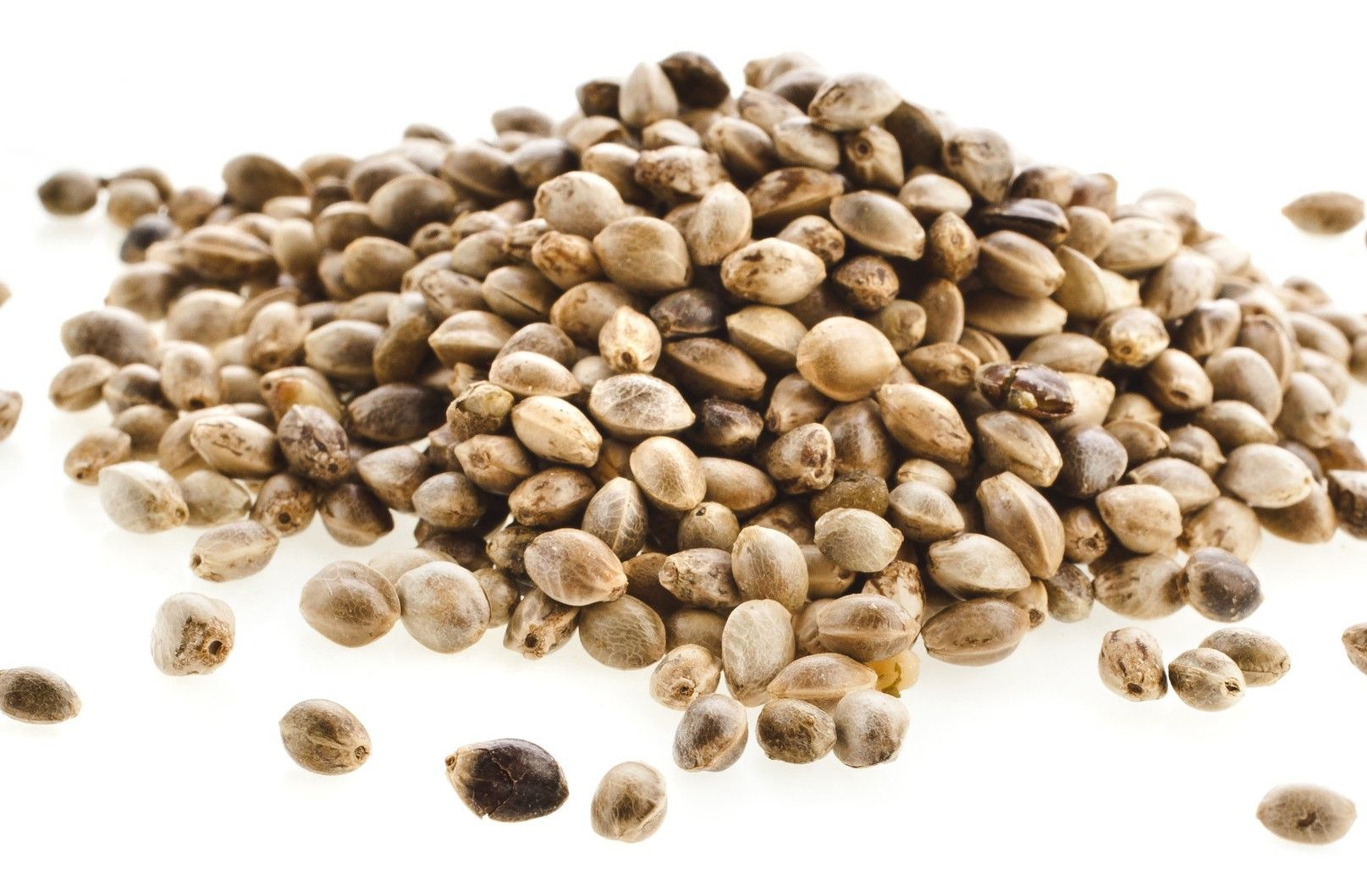 Semințele de canepa: sursă completă de proteine, proprietăți, beneficii și contraindicații