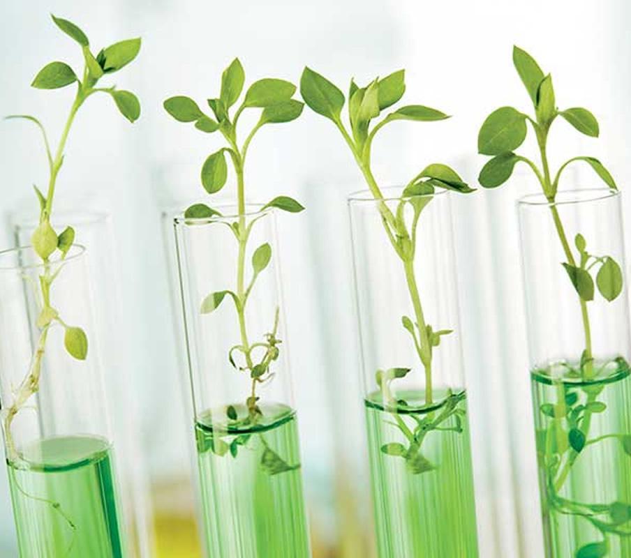 Curățarea casei Eco Bio, cu detergenții ecologici Ekos si ECOSI